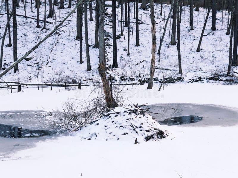 Casetta del castoro in neve fotografie stock