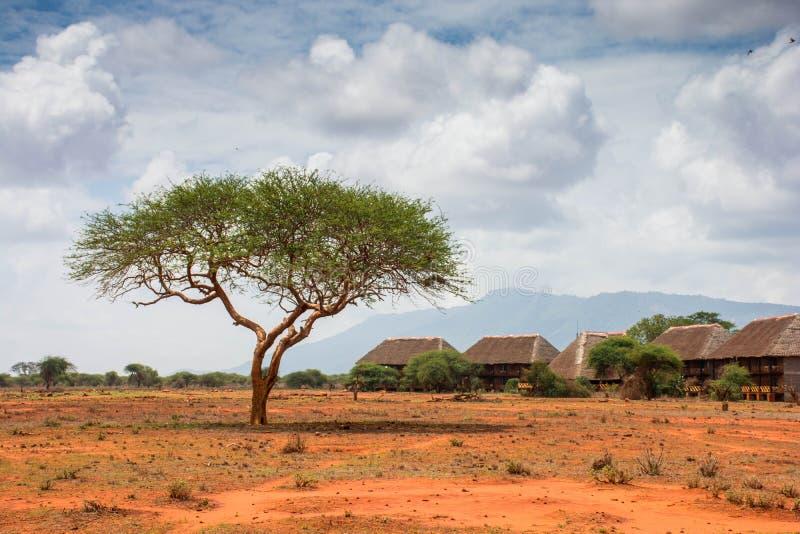 Casetta di safari di Ngutuni Bello paesaggio africano Albero solo nel Kenya Parco nazionale di Ngutuni immagine stock libera da diritti