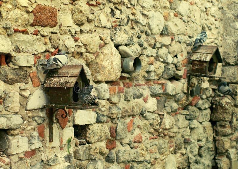 Casette per i piccioni ed i piccioni fotografia stock libera da diritti