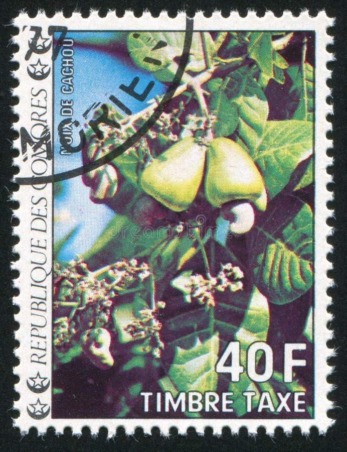 cashew royaltyfri bild