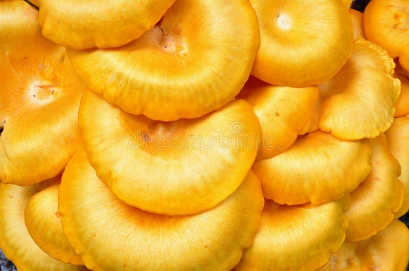 Casquillos anaranjados brillantes de illudens del omphalotus, o seta de la Jack-o'-linterna foto de archivo libre de regalías