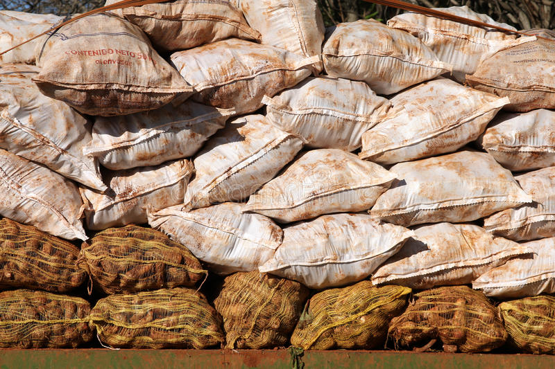 Download Cassava bags stock image. Image of packed, cuba, transportation - 20799721