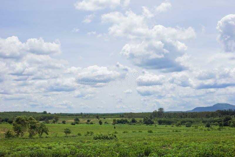 Cassava landscapes farm stock photography