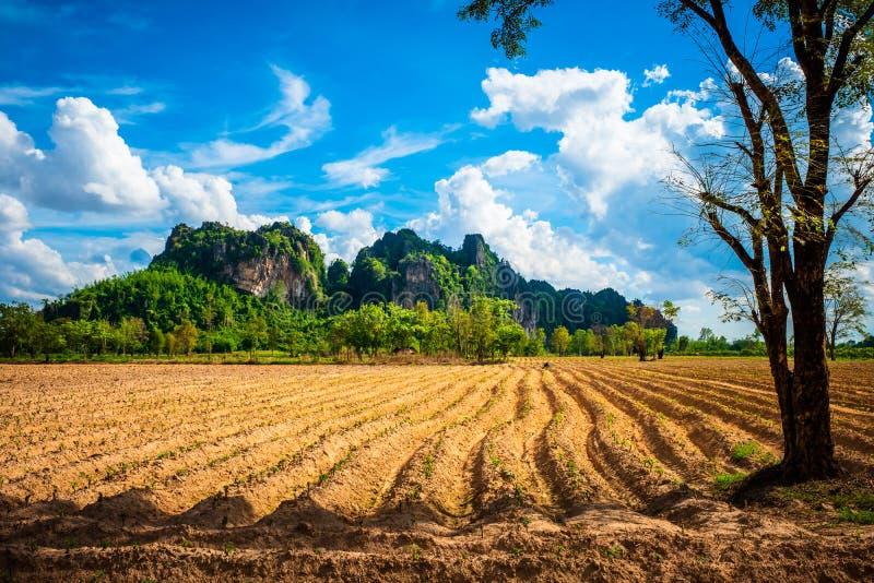 Cassava Plow Land, vue sur Noen Maprang, Phitsanulok, Thaïlande photo libre de droits
