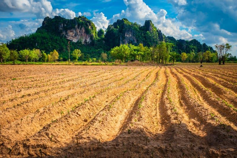 Cassava Plow Land, vue sur Noen Maprang, Phitsanulok, Thaïlande images stock
