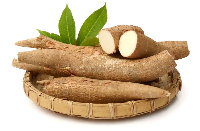 Cassava tubers stock image. Image of popularity, white