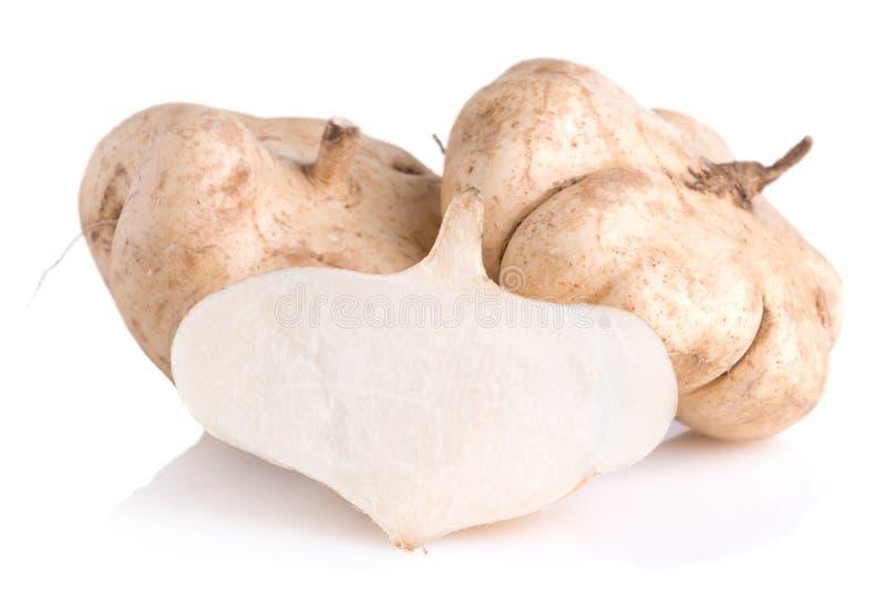 Cassava, Yam bean, Pachyrhizus erosus L. Urbar, Jicama on whit stock image
