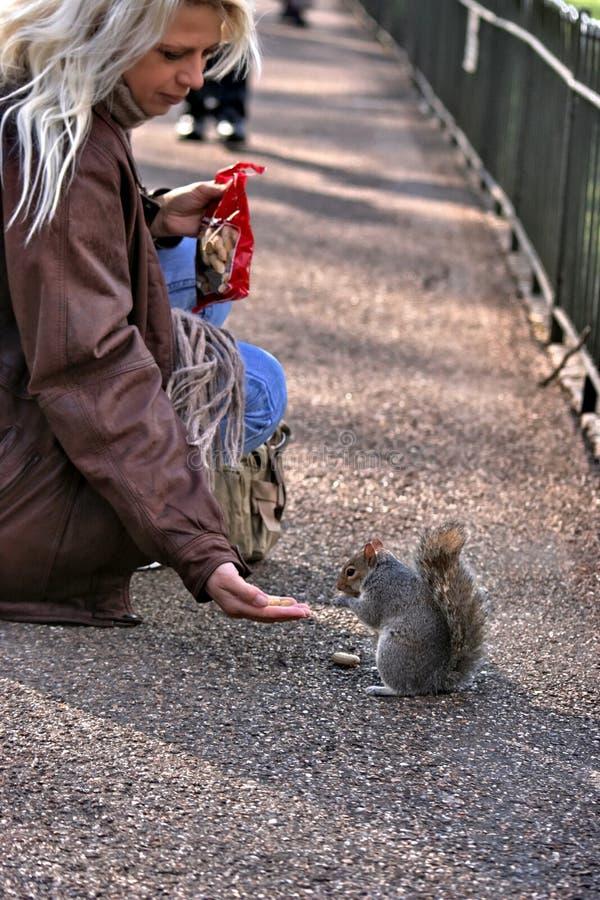 Casse-croûte de cisaillement de jeune femme et d'écureuil photographie stock libre de droits