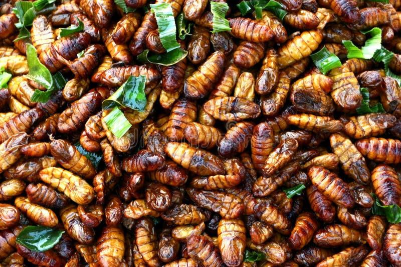 Casse-croûte frit de larve d'insecte photos stock