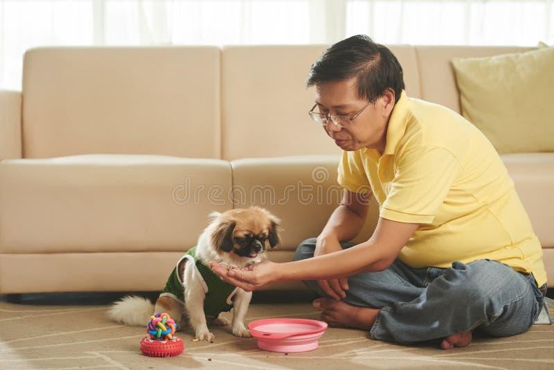 Casse-croûte pour le chien photo libre de droits
