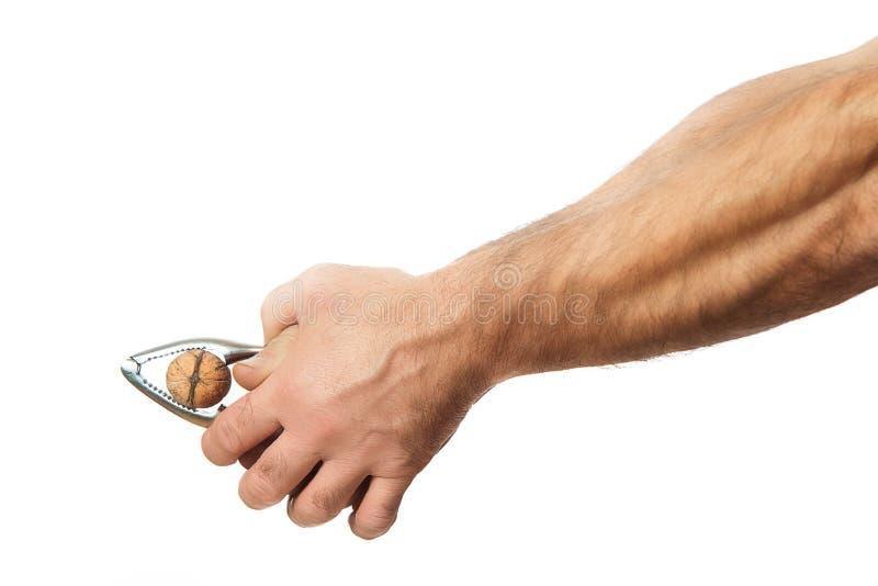 Casse-noix tenu dans des mains photo stock