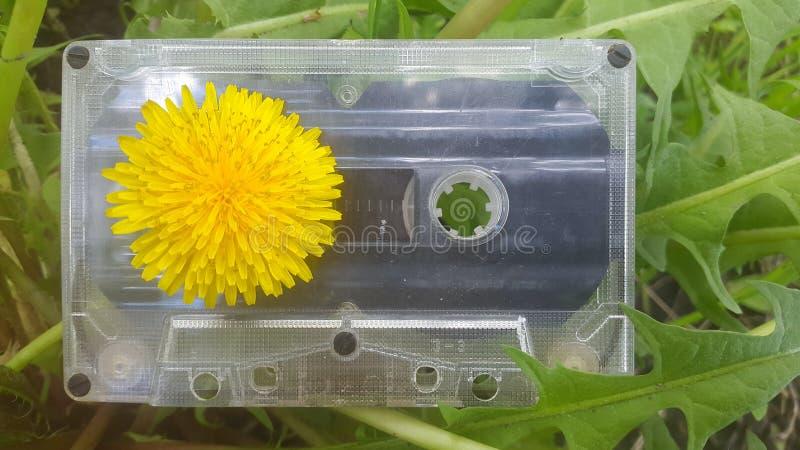 Cassete áudio o fundo do dente-de-leão fotografia de stock