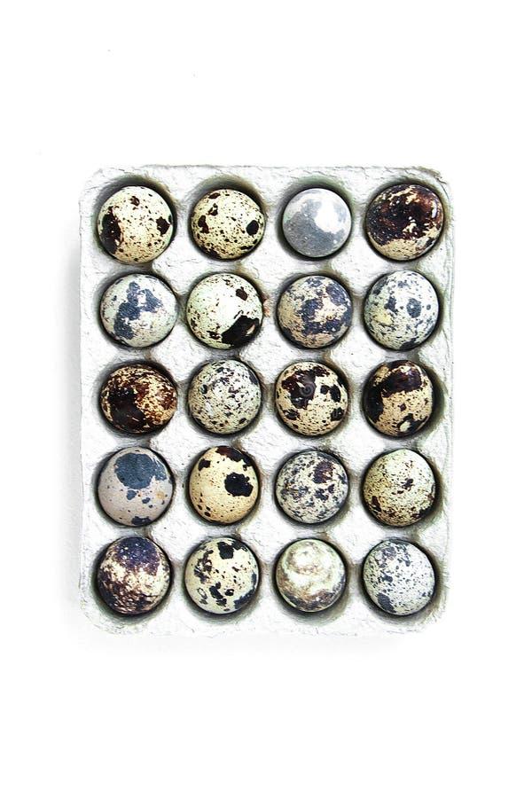 Cassette of twenty fresh raw spotted quail eggs isolated on white background stock photo