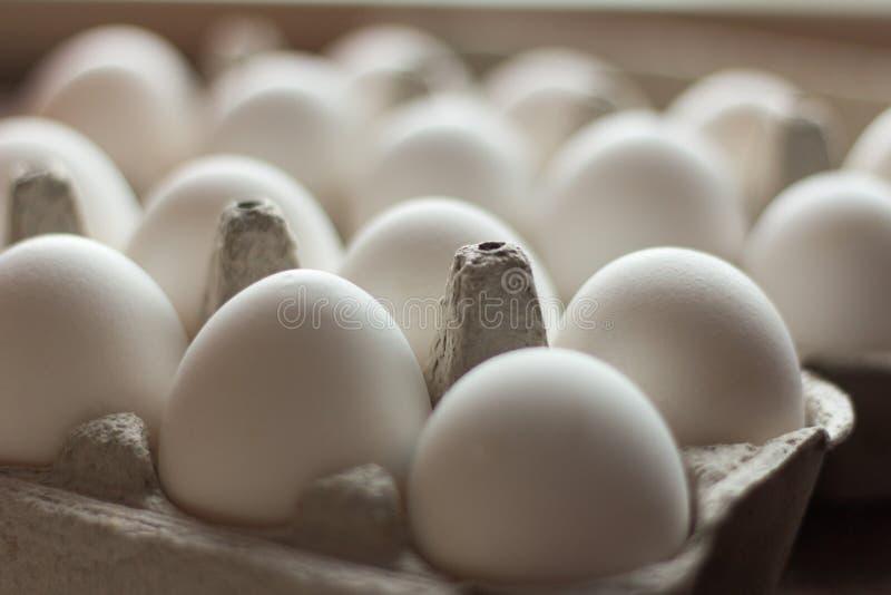 Cassette of white fresh chicken eggs close-up stock image