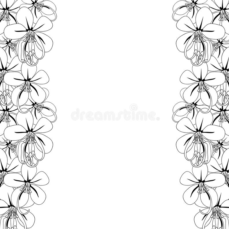Cassia Fistula - Golden Shower Flower on White Background with copy space. Vector Illustration.  royalty free illustration
