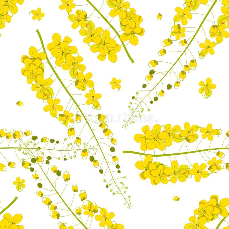 Cassia Fistula - Golden Shower Flower on White Background. Vector Illustration stock illustration
