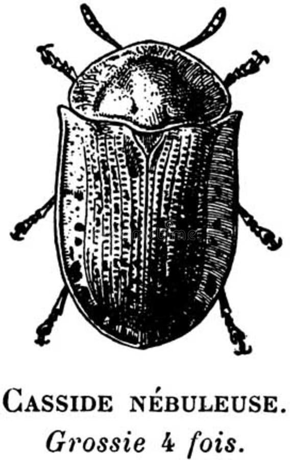 Casside-oa Free Public Domain Cc0 Image