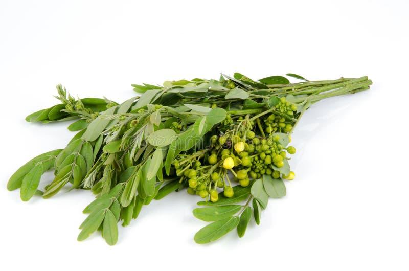 Cassodboom, Thaise koperpeul (Seneplantsiamea (Lam.) Irwin & Barneby), Leguminosae - ceasalpinioideae. stock fotografie