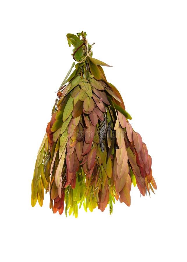 Cassodboom, Thaise koperpeul (Seneplantsiamea (Lam ) Irwin & Barneby), Leguminosae - ceasalpinioideae royalty-vrije stock foto
