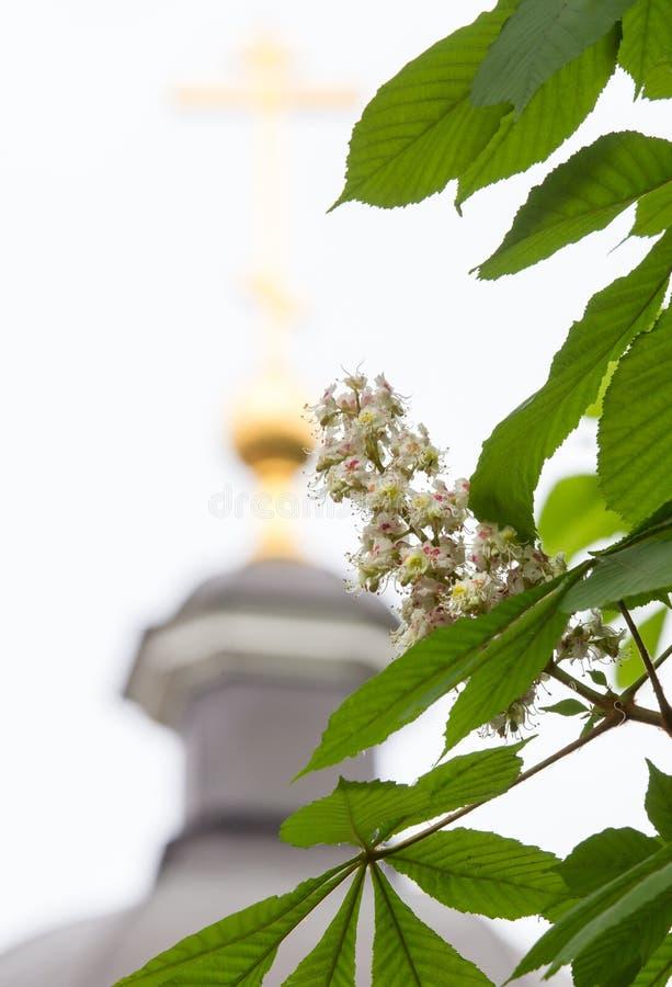 Castaña floreciente foto de archivo
