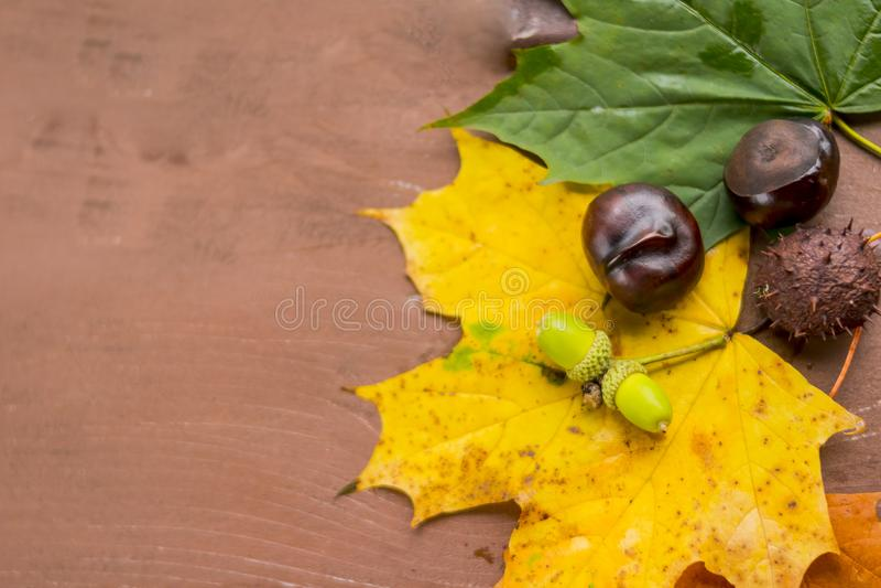 Castañas, bellotas y nueces en un woodenbackground de las hojas de otoño Autumn Still Life con el espacio para el texto Humor del imagen de archivo