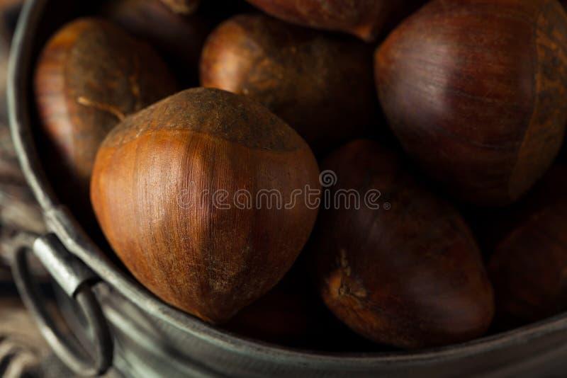 Castañas italianas orgánicas crudas de Brown fotos de archivo