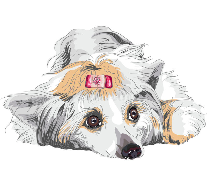 Casta con cresta china del perro del bosquejo stock de ilustración