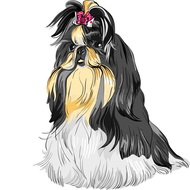 Casta de Shih Tzu del perro del bosquejo stock de ilustración