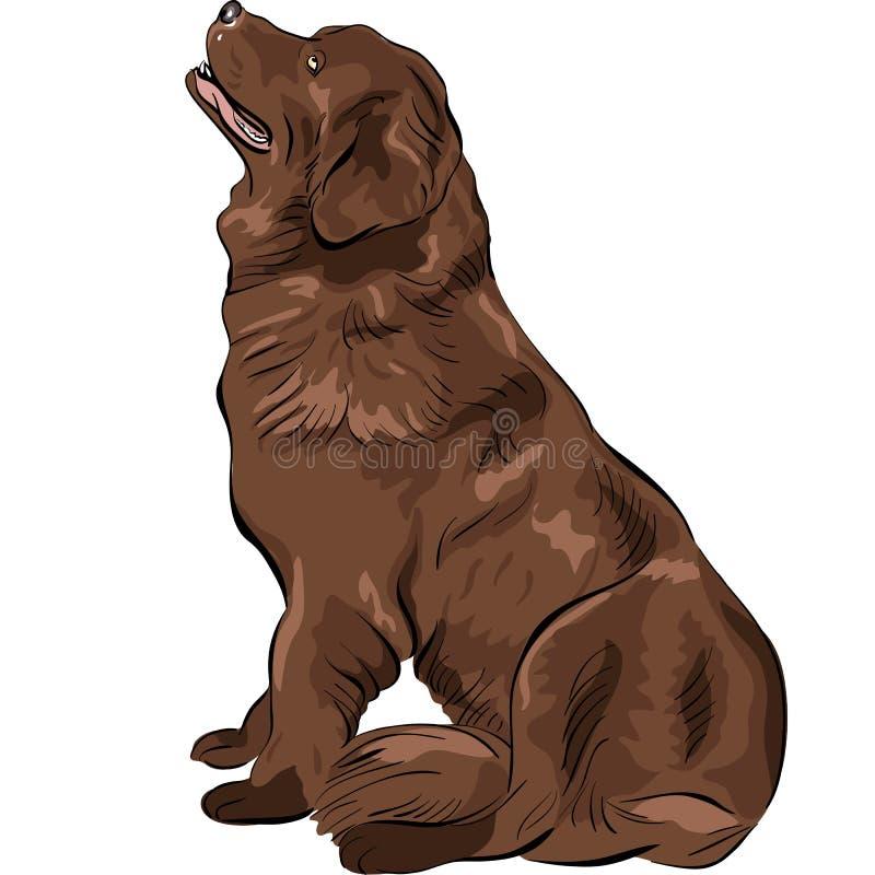 Casta de Terranova del perro del bosquejo del color libre illustration