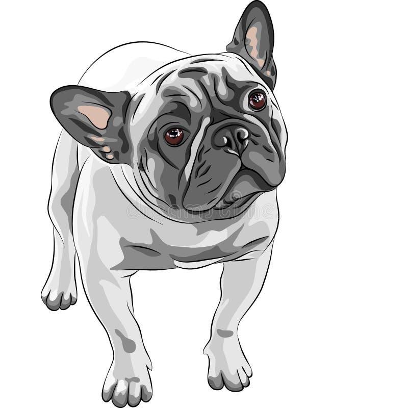 Casta del dogo francés del perro doméstico del bosquejo ilustración del vector