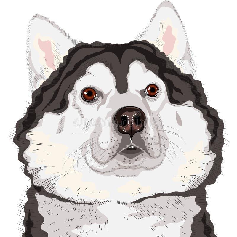 Casta del Malamute de Alaska del perro ilustración del vector
