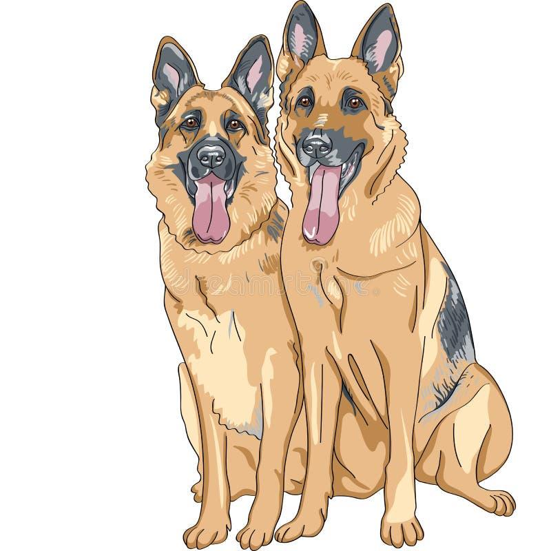 casta del pastor alemán del perro del vector dos stock de ilustración
