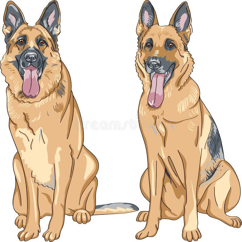 casta del pastor alemán del perro del vector dos libre illustration