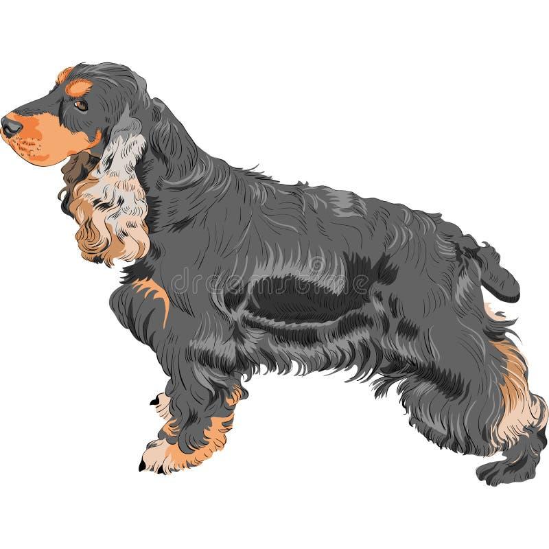 Casta del perro de aguas de cocker del inglés negro del perro ilustración del vector