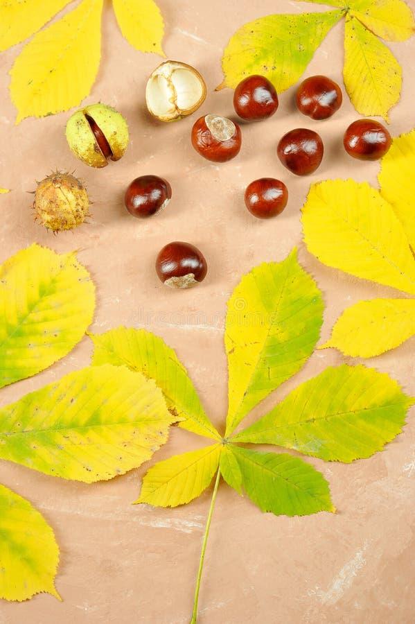 Castagne con le foglie di autunno dell'acero - castagna d'India fotografie stock