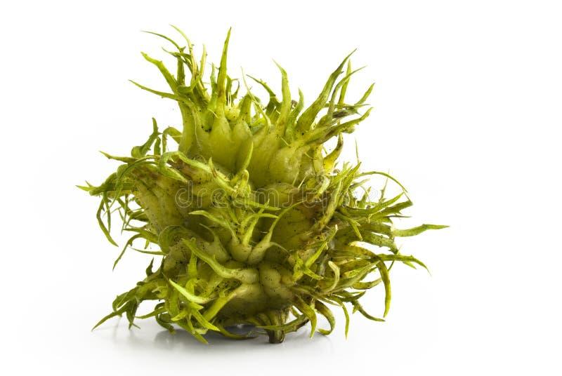 Castanha spiky verde foto de stock royalty free