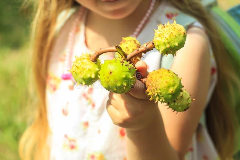 Castanhas e folha da castanha no girl& x27; as mãos de s podem usar-se como o fundo imagem de stock royalty free
