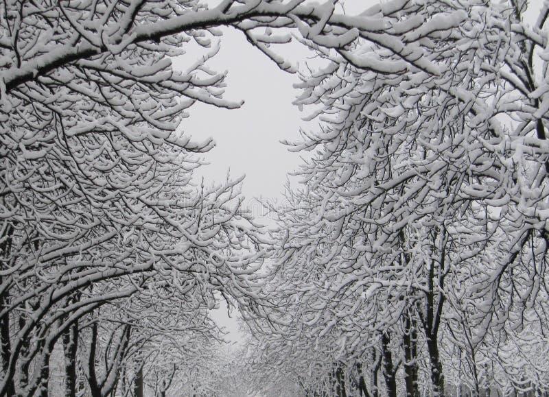 Castanhas na neve imagens de stock