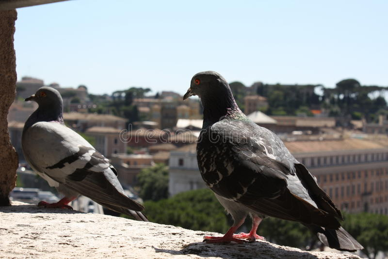 Castel Sant ` Angelo, Rome royalty-vrije stock fotografie