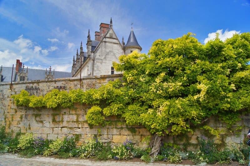 Castello di Amboise di fiaba Parete dell'albero della Francia fotografia stock