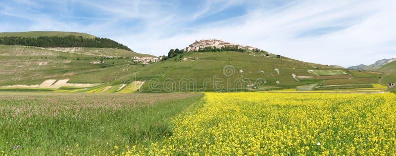 Castelluccio Di Norcia. Cultivation Of Lentils Stock Photo