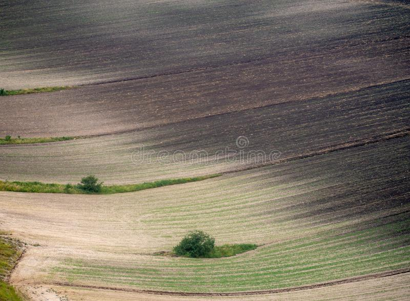 Castelluccio di Norcia, ?mbria, It?lia Detalhe do campo, cultivo do vale, abstrato fotografia de stock royalty free