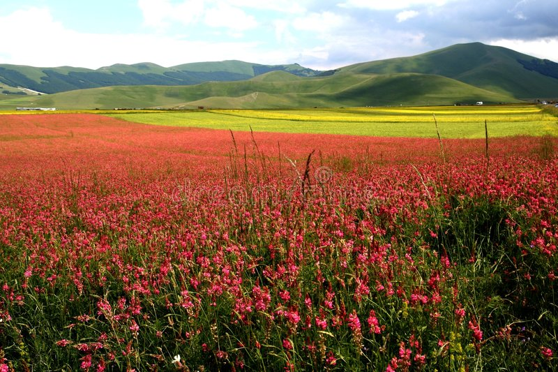 Castelluccio /spring landscape royalty free stock photo