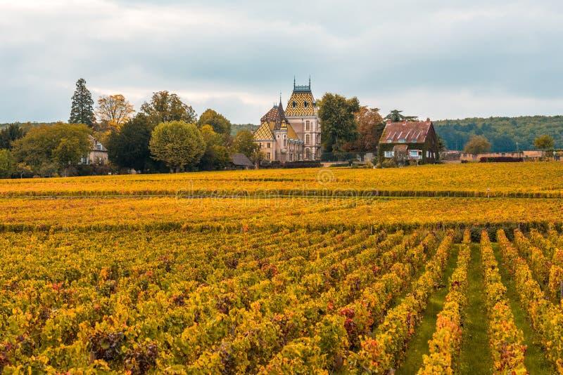 Castelo com os vinhedos na estação do outono, Borgonha, França imagens de stock