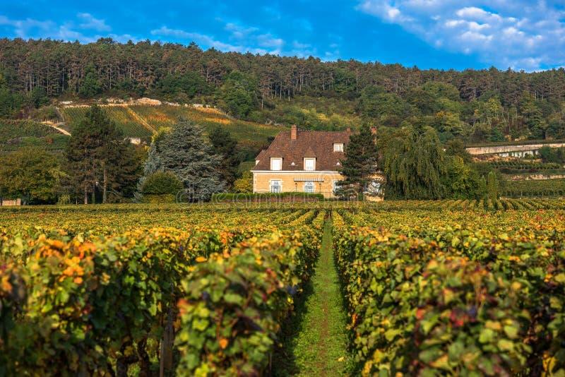 Castelo com os vinhedos na estação do outono, Borgonha, França fotografia de stock royalty free