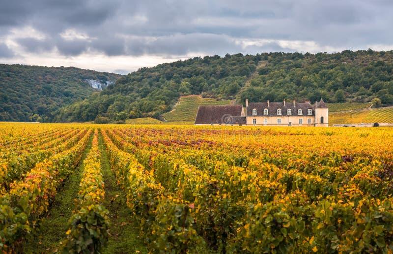 Castelo com os vinhedos na estação do outono, Borgonha, França imagem de stock royalty free