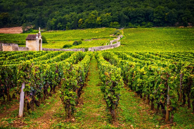 Castelo com vinhedos, Borgonha, France foto de stock royalty free