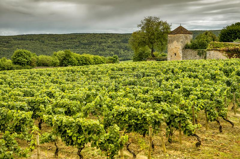 Castelo com vinhedos, Borgonha, France fotos de stock royalty free