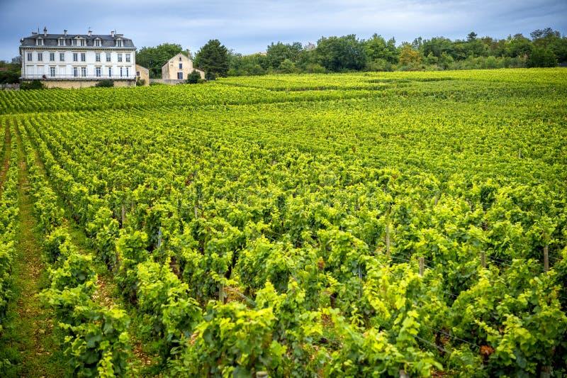 Castelo com vinhedos, Borgonha, France imagens de stock