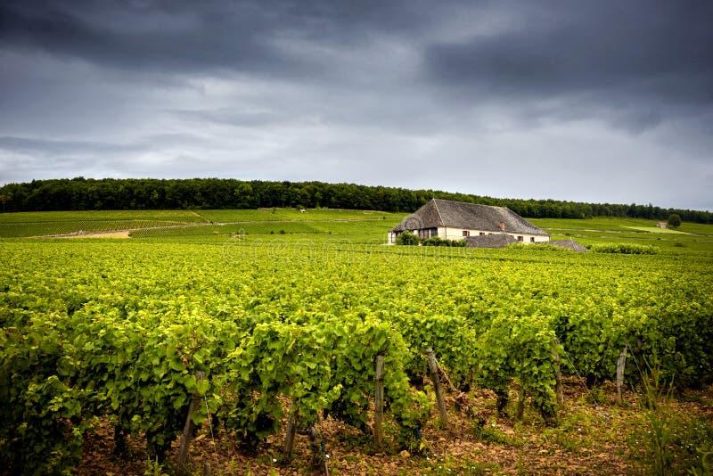 Castelo com vinhedos, Borgonha france fotografia de stock royalty free